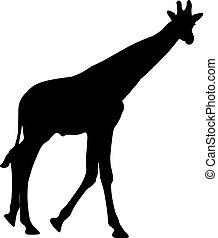 黑色半面畫像, 被隔离, 插圖, 矢量, 黑色, giraffe.