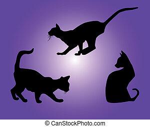 黑色半面畫像, 貓, 黑色