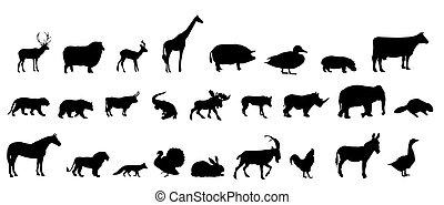 黑色半面畫像, 集合, 矢量, 動物