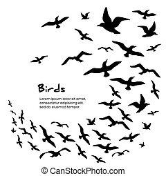 黑色半面畫像, 飛行, 鳥