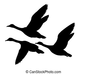 黑色半面畫像, 飛行, 鴨子, 矢量, 背景, 白色