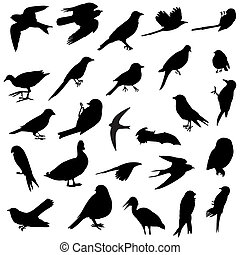 黑色半面畫像, 鳥