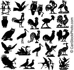 黑色半面畫像, 鳥, 插圖, 彙整