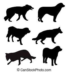 黑色半面畫像, 黑色, 狗