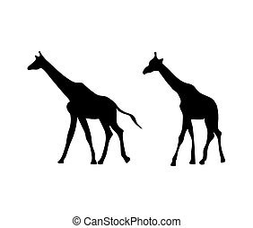 黑色半面畫像, 黑色, 長頸鹿
