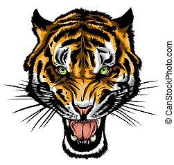 anger., head., 矢量, tiger, 插圖