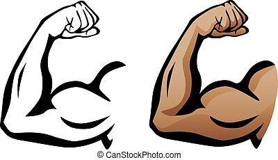 bicep, 肌肉, 屈曲, 手臂