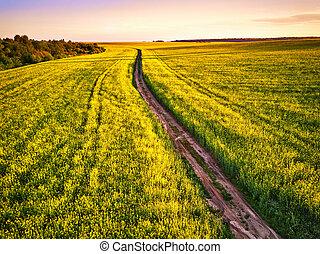 canola, 泥土, 春天, sunrise., 領域, 開花, 路