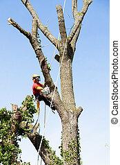 chainsaw, 切, 樹, 樹木栽培家