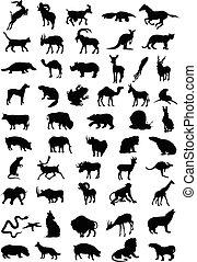 colour., 插圖, 黑色半面畫像, 矢量, 黑色, 動物