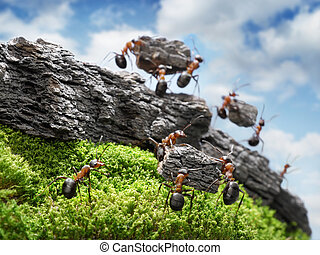 costructing, 偉大, 概念, 牆, 螞蟻, 配合, 隊