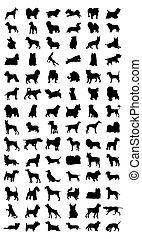 dog., 不同, 插圖, 黑色半面畫像, 矢量, 黑色, 養殖