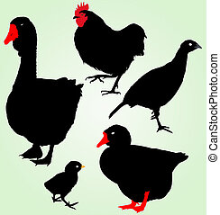ferme, 黑色半面畫像, 鳥, 彙整