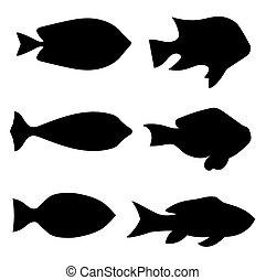 fish, -, 插圖, 黑色半面畫像, 矢量, 黑色