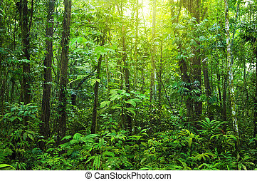 forest., 密集