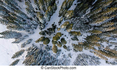 forest., 看法, 冬天, 空中