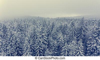 forest., 空中, 冬天, 松樹, 看法