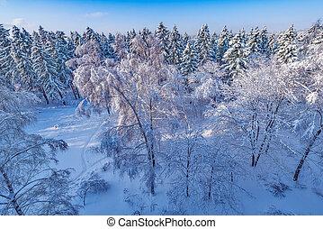 forest., 空中, 冬天, 看法