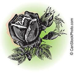 grunge, 玫瑰, 標識語, 設計, 葡萄酒