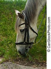 harnessed, 森林, 皮革, 馬, 關閉, 肖像, 吃草, horse., 灰色, 草, 向上, 鞔具, 白色, 綠色