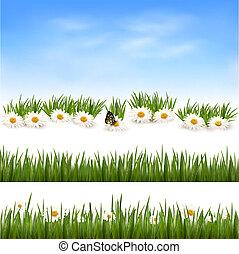 illustration., 彙整, 矢量, 綠色, backgrounds., 草