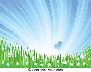 meadow., 春天