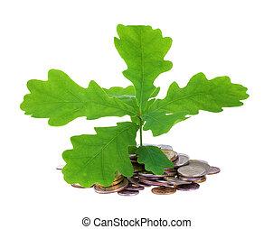oak-tree, 硬幣, 概念, 年輕