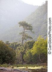 ond, 松樹, 山, 孤獨