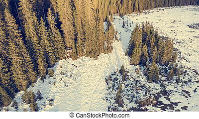 snow., 空中, 蓋, 森林, 看法, 冬天, 草地