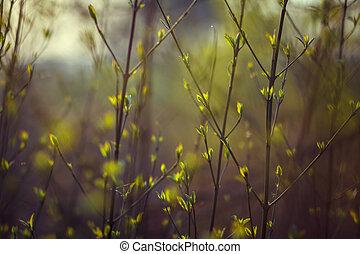 spring., 光, 樹, leaves., 樹, 小, 綠色的背景, 開花, 前面, 分支, green., 看法