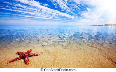 starfish, 天堂