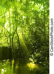 stream., 綠色的森林