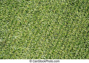 syntethic, 足球, 天氣, 草, 綠色的領域, 全部