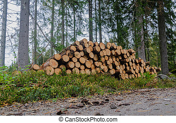 timberstack, 路邊, 整洁漂亮, 樹